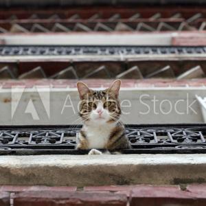 Chat posant à la fenêtre.